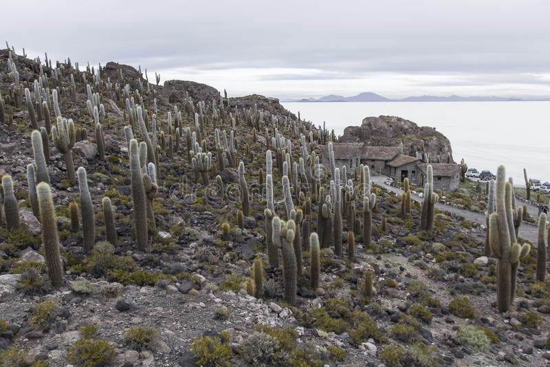 Isla Incahuasi (Pescadores), Salar de Uyuni, Bolivia.  stock photo