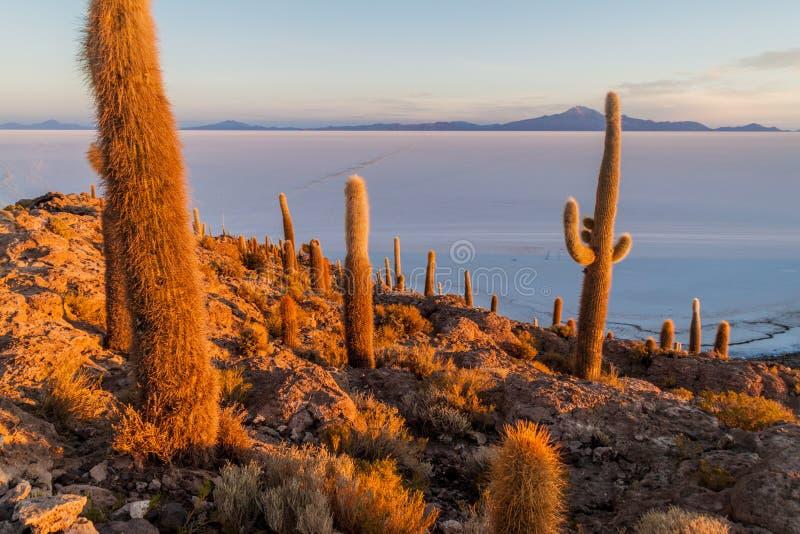 Isla Incahuasi in Salar de Uyuni, BoliviaIsla Incahuasi in Salar de Uyuni, Bolivia fotografia stock