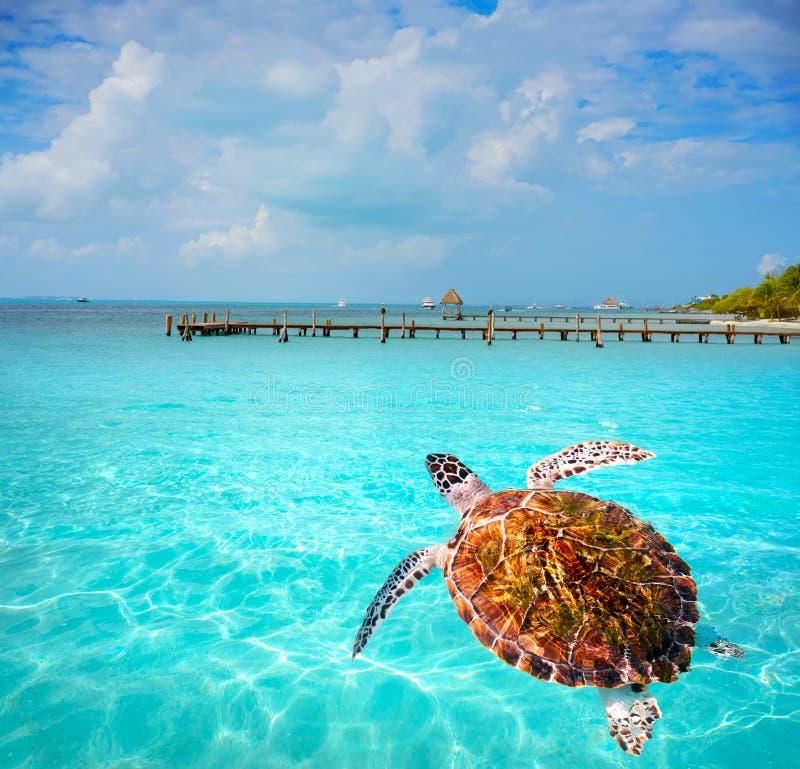 Isla Mujeres-eiland Caraïbisch strand Mexico stock fotografie