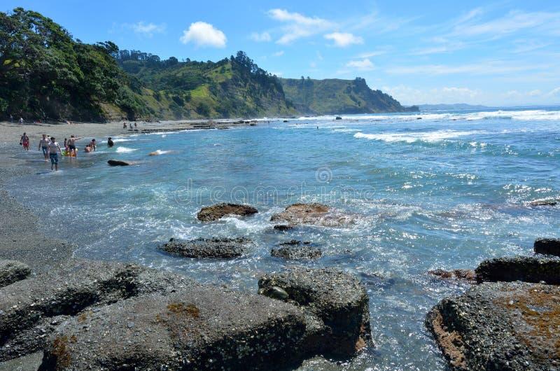 Isla Nueva Zelanda de la cabra foto de archivo libre de regalías