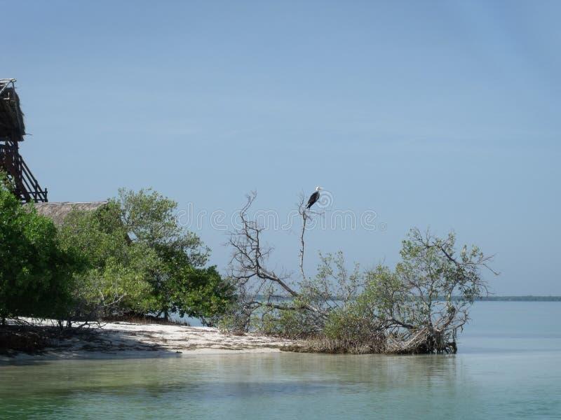 Isla Pasion - Yum Balam, Messico fotografie stock libere da diritti
