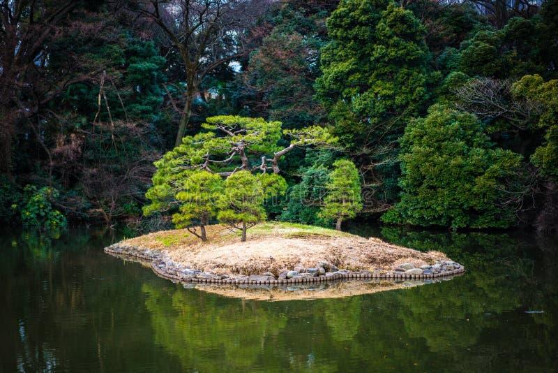 Isla sola del árbol en el parque de Shinjuku Gyoen fotografía de archivo libre de regalías