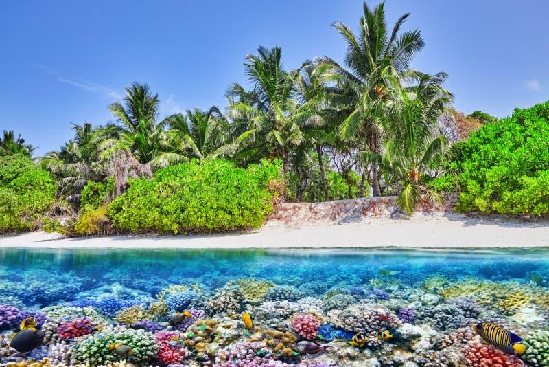 Isla tropical y el mundo subacuático en los Maldivas fotos de archivo libres de regalías
