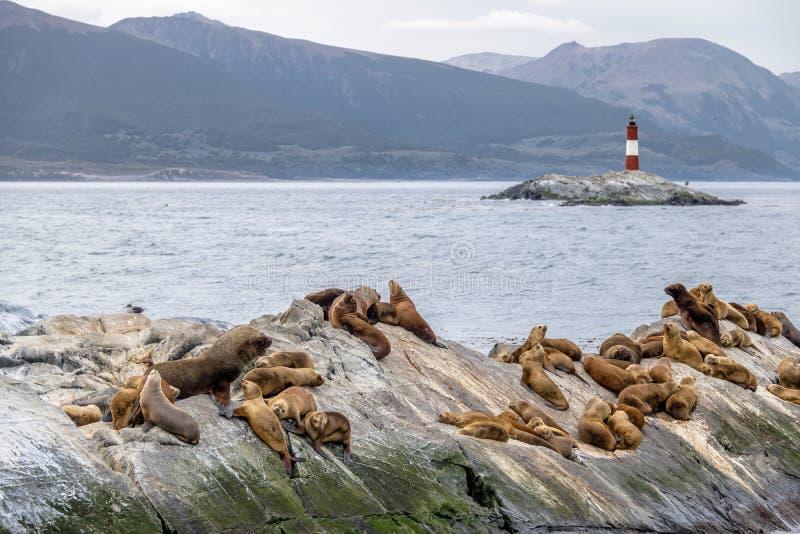 Isla y faro - canal del beagle, Ushuaia, la Argentina de los leones marinos imagen de archivo