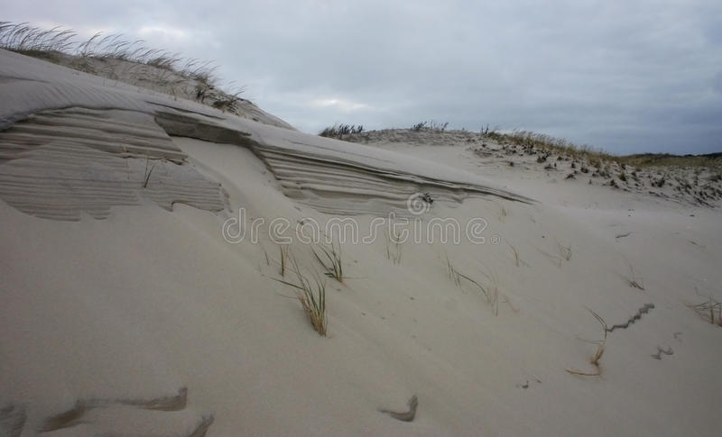 Island Beach State Park. Miles of sand dunes and white sandy beaches offer habitat to maritime plants and diverse wildlife that i. Island Beach State Park. Miles royalty free stock photo