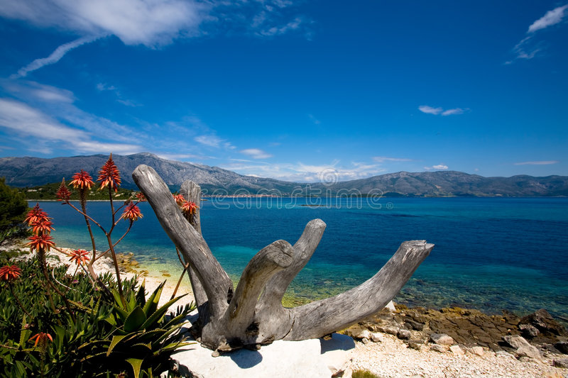 Download Island beauty stock image. Image of tree, blue, travel - 2618887