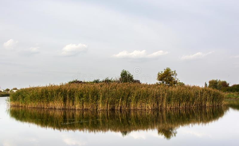 Island of bulrush in the lake royalty free stock photos