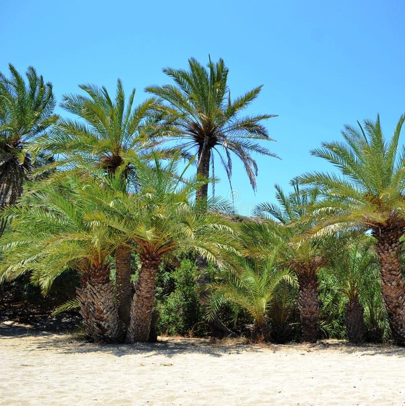 Download Island Crete, Greece, Palm Tree Stock Image - Image: 29709097