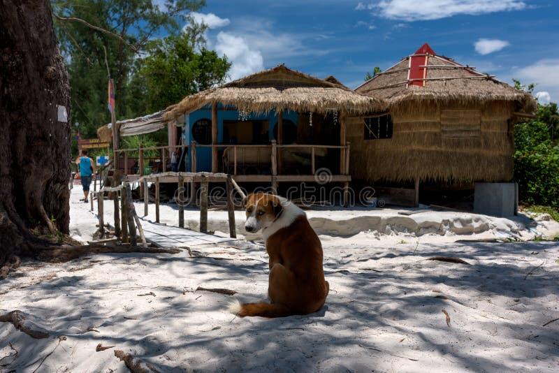 Island Dog siting on the sand under the tree. And looking around. Koh Rong Samloem island, Saracen Bay. Cambodia, Asia. 08 September 2017 royalty free stock photo