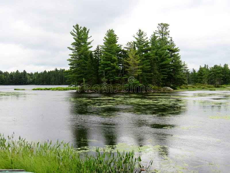 Island full of grown trees in the middle of a lake royalty free stock images