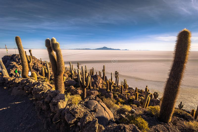 Island of Incahuasi at the Uyuni Salt Flats, Bolivia stock photography