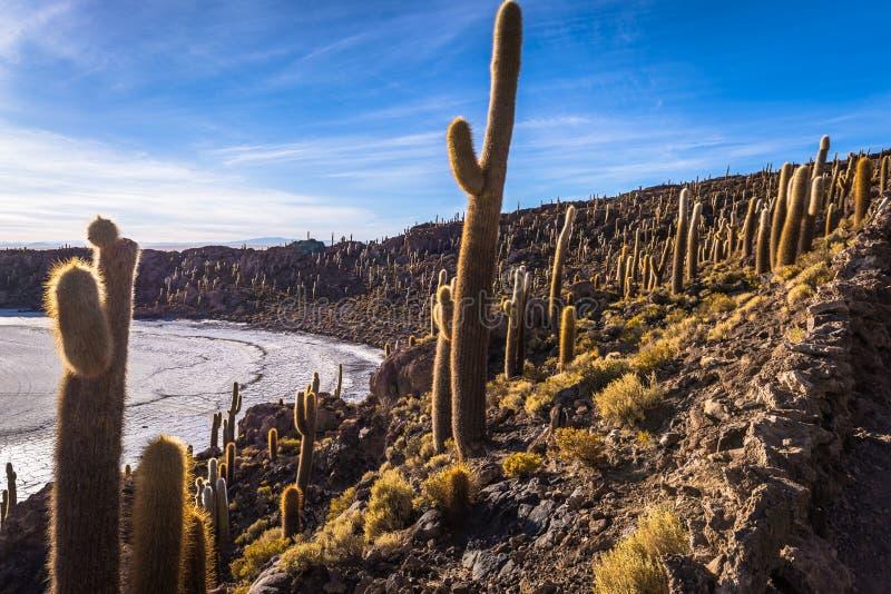 Island of Incahuasi at the Uyuni Salt Flats, Bolivia royalty free stock photos