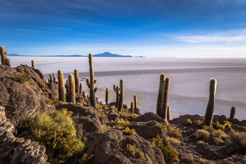 Island of Incahuasi at the Uyuni Salt Flats, Bolivia royalty free stock photo