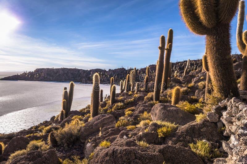 Island of Incahuasi at the Uyuni Salt Flats, Bolivia stock photos