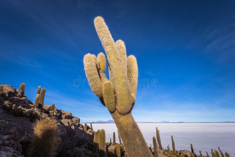 Island of Incahuasi at the Uyuni Salt Flats, Bolivia royalty free stock images