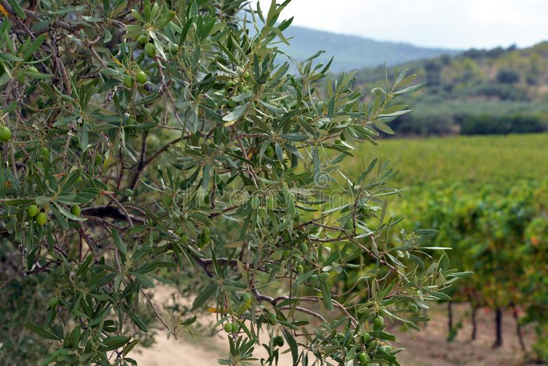Italian countryside Landscape. Region of Sardinia stock images