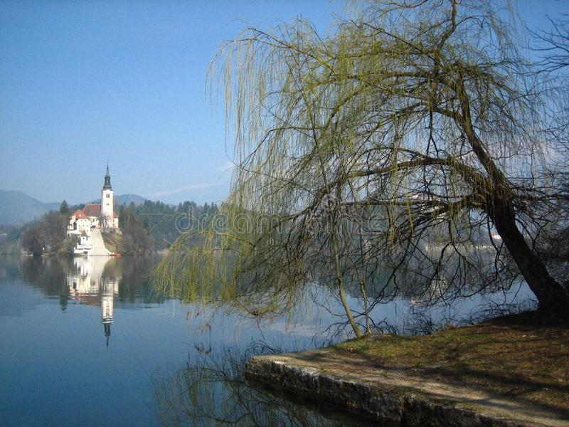 Island in Lake Bled. A shore-view of the island in Lake Bled with a tree in the foreground stock photo