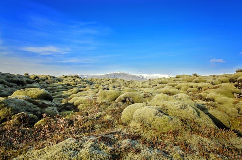 Island lavafält royaltyfri bild