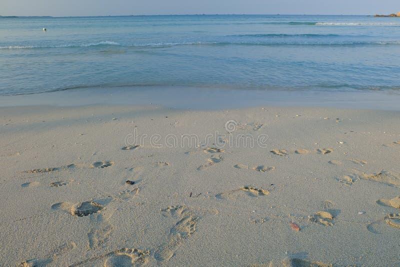 island maldivian royaltyfria foton