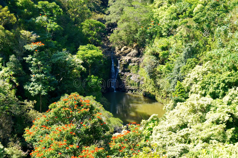 Island Maui waterfall with lake and jangles. stock images