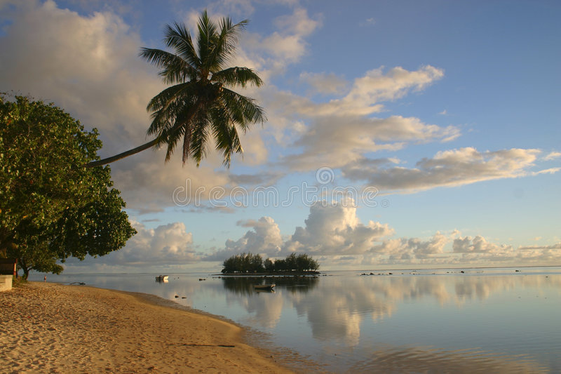 Download Island Moorea stock image. Image of lonely, loose, palm - 5233035