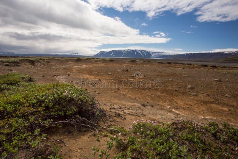 Island naturlandskap med grön låg vegetation och sand royaltyfria bilder