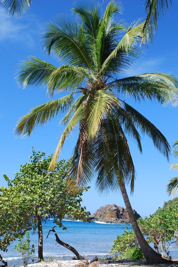 Island Paradise stock photo