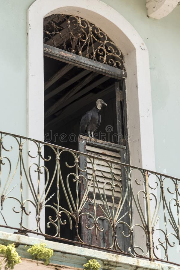 Old balcony and door with a carrion bird in the Old Town of Panama. Panama City, the capital of Panama, is a modern city framed by the Pacific Ocean and man royalty free stock photos