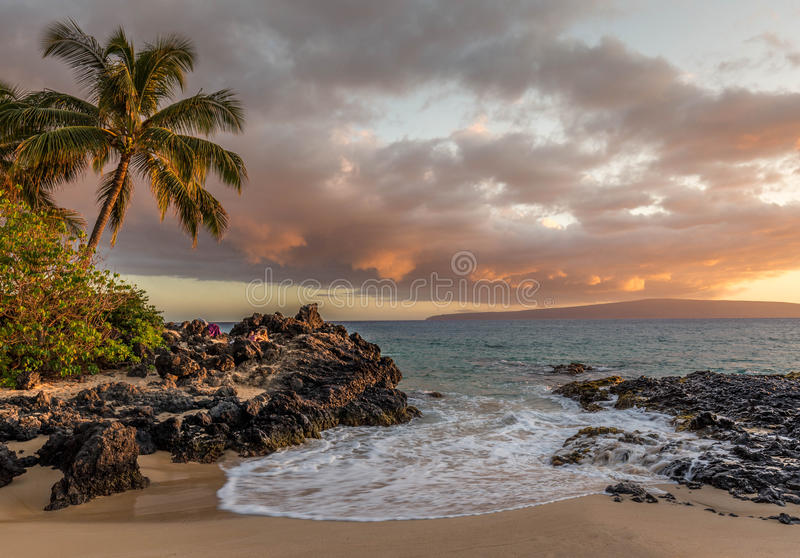 Island in the sun with beach and palm trees royalty free stock images