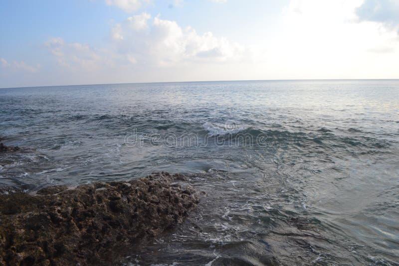 Islas Andaman y icobar Ave azul fotografía de archivo libre de regalías