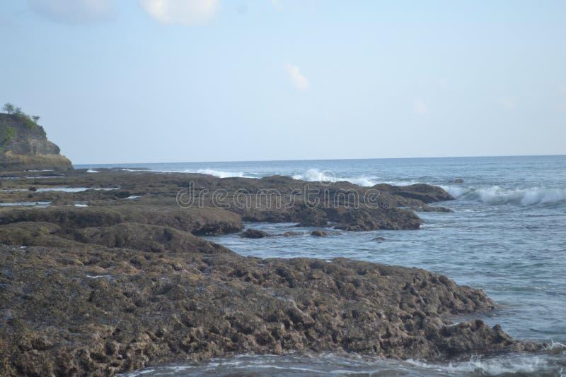 Islas Andaman y icobar Ave azul imágenes de archivo libres de regalías