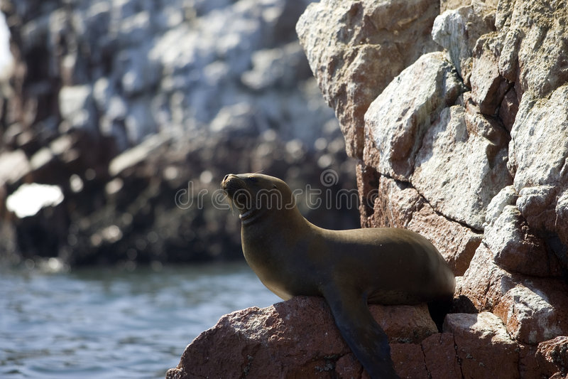 Download Islas Ballestas stock image. Image of paracas, beach, water - 2150621
