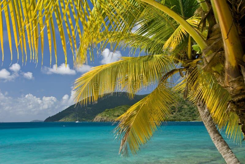Islas de la palmera imagen de archivo