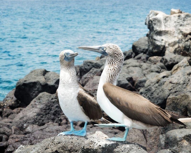 Islas de las Islas Galápagos fotografía de archivo libre de regalías