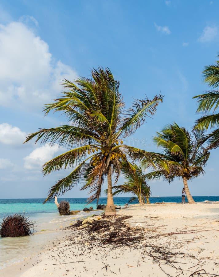 Islas de San Blas en Panamá imagenes de archivo