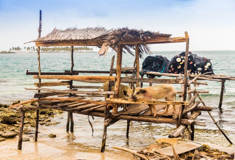 Islas de San Blas en Panamá fotos de archivo libres de regalías