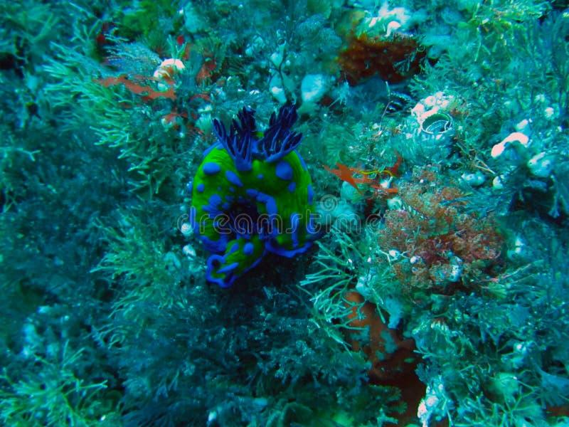 Islas Marine Reserve de los caballeros de los pobres subacuática imagen de archivo libre de regalías
