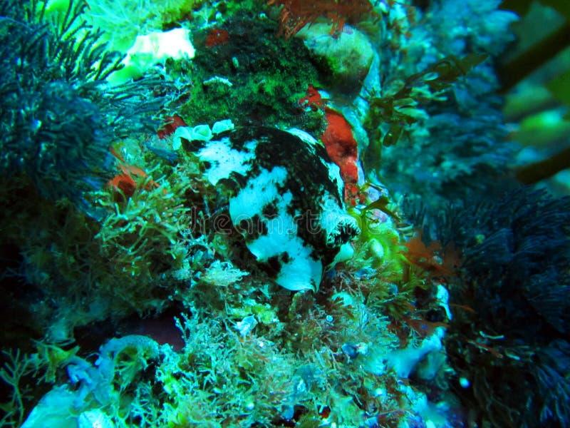 Islas Marine Reserve de los caballeros de los pobres subacuática fotos de archivo libres de regalías