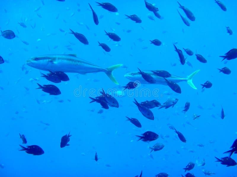 Islas Marine Reserve de los caballeros de los pobres subacuática foto de archivo