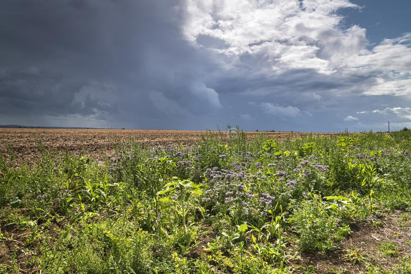 Isle of Sheppy. Angry dark clouds looming over the Isle of Sheppy countryside during a period of unsettled weather, Kent, England royalty free stock photography