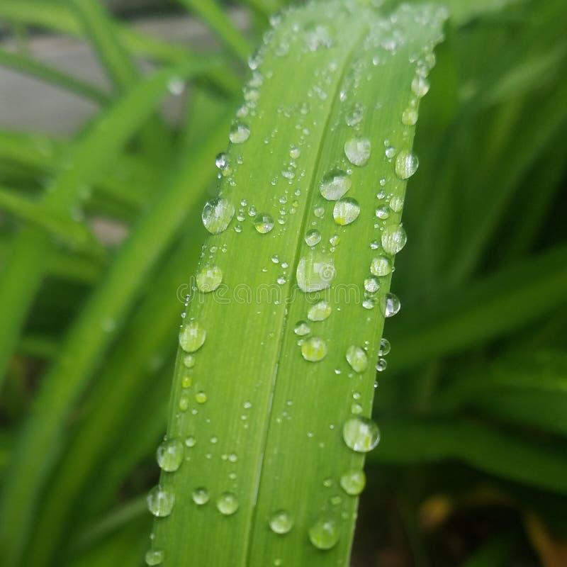Isn& x27 de l'eau ; t humide photos libres de droits