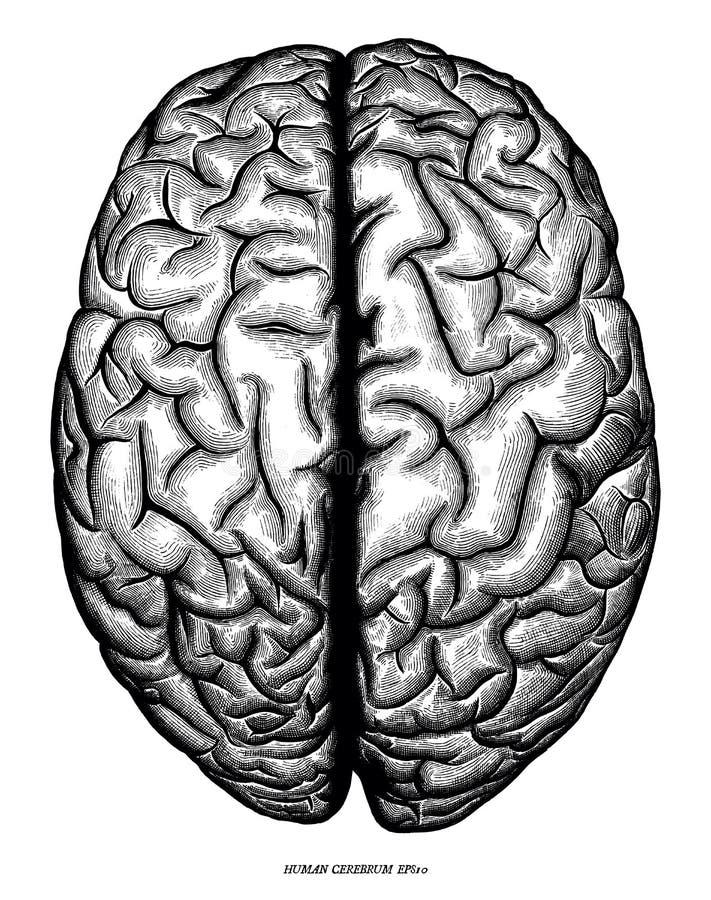 Iso d'annata di clipart del cervello di vista superiore della mano dell'incisione umana di tiraggio illustrazione di stock