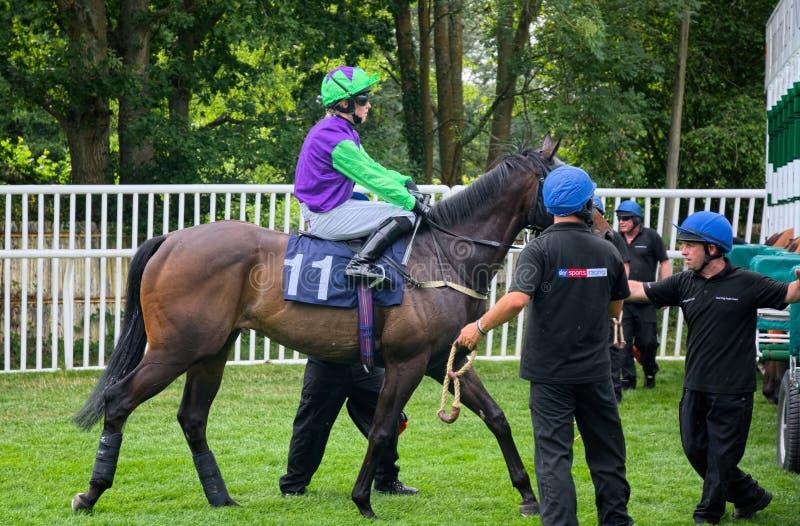 Isobel Francis BRITISCHER Jockey Pferderennen des Lehrlings stockfotos