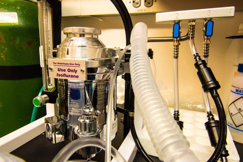 Isoflurane maskin för veterinär- behandling med lugnande medel av laboratoriummöss royaltyfri bild