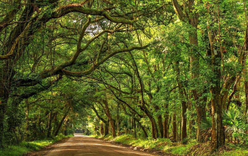 Isola Carolina Road Light And Shadow del sud di Edisto della baia di botanica immagine stock libera da diritti