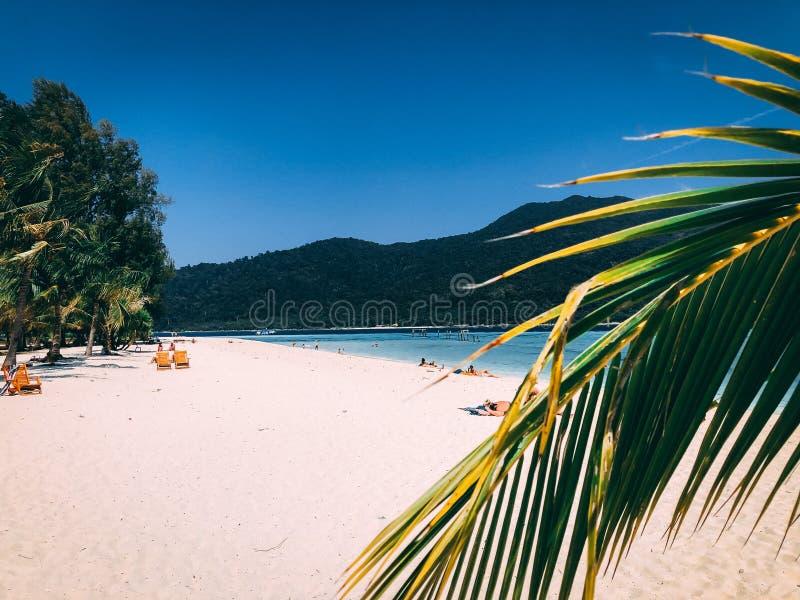 Isola Crystal Clear Sea, blu, palme di Paradise, su fyre fotografie stock libere da diritti