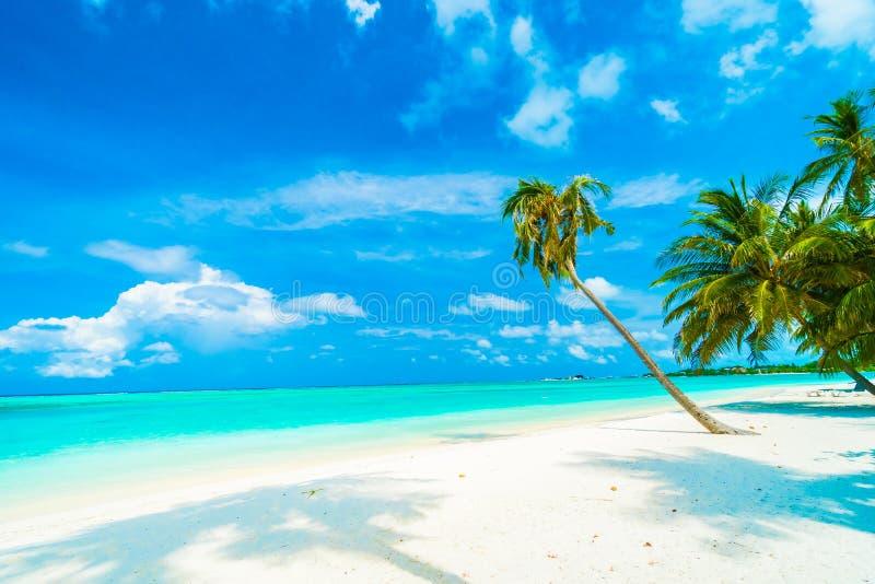 Isola dei Maldives immagini stock libere da diritti