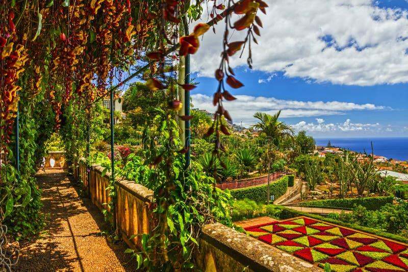 Isola del Madera, giardino botanico Monte, Funchal, Portogallo fotografie stock libere da diritti