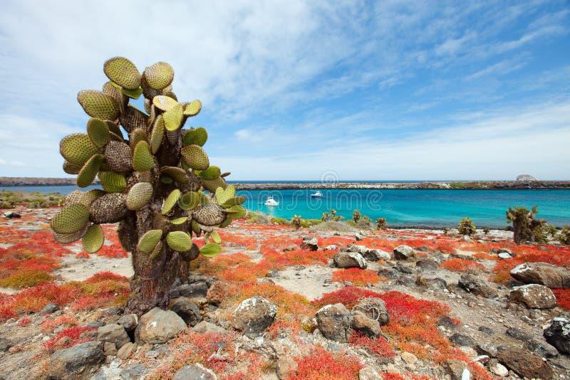 Isola del sud della plaza immagine stock