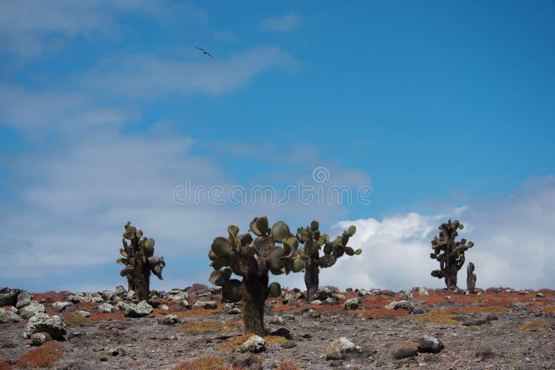 Isola del sud della plaza immagini stock